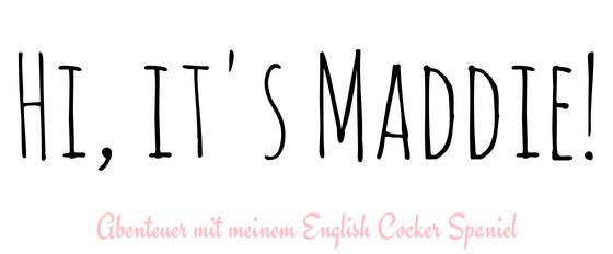 Hi, it's Maddie! – Hundeblog