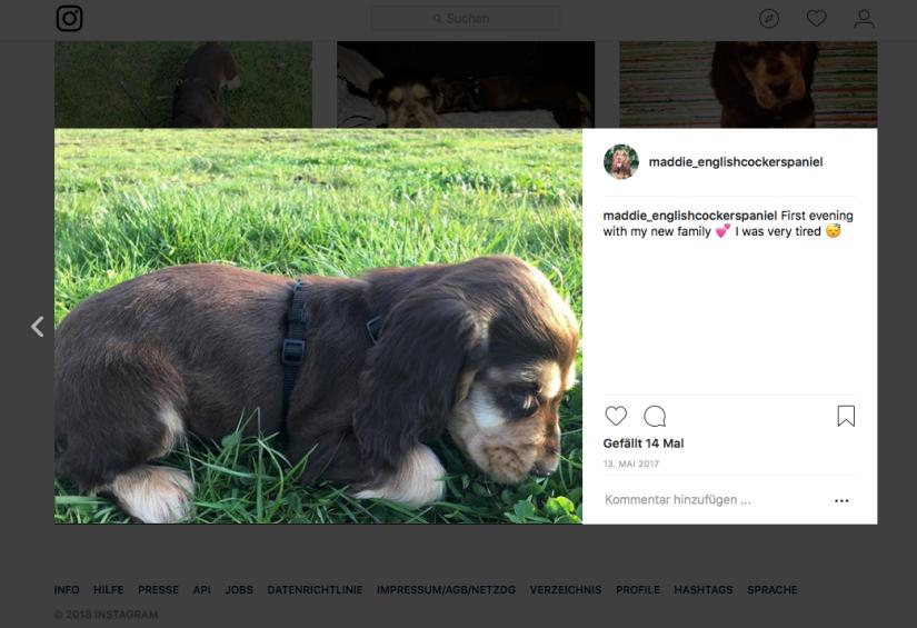 Instagram Maddie